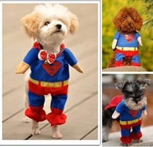 Superdog-Kostüm!