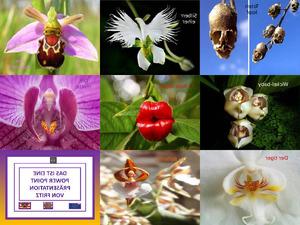 Orchideen Gestalten