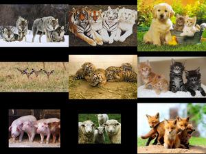 Quattro Animali