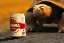 Brasilianische Bierwerbung