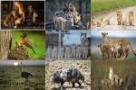 Tier-Familien.pps auf www.funpot.net