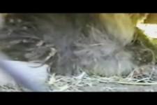 Überraschung im Nest