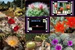 Kaktus.pps auf www.funpot.net