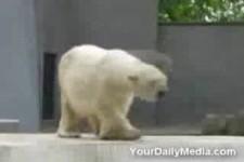 Eisbaerentanz