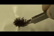 die Ameisen halten zusammen unglaublich