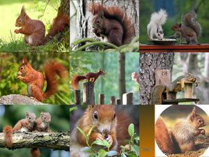 Bilder von Eichhörnchen