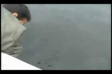 Dieser Wal macht Geräusche wie ein Motorboot
