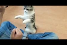 dressierte Katze