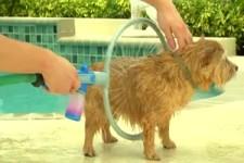 Hunde-Dusche
