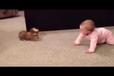 Unterhaltung zwischen Baby und Kleinem Hund