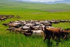 Nord Asien Mongolei