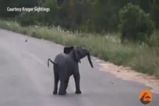 Baby-Elefant jagt Voegel