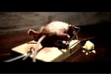 diese Maus hats raus