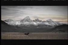 Budweiser Horse Love Super Bowl XLIII Commercial