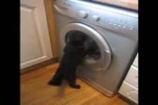 Buzzi und die Waschmaschine