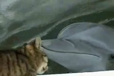 dolphin-meets-feline