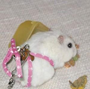 Hamsterleine!
