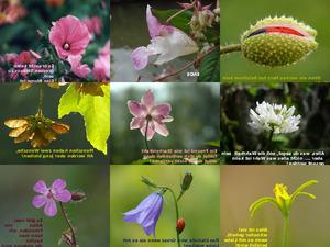 sag es mit Blumen 1