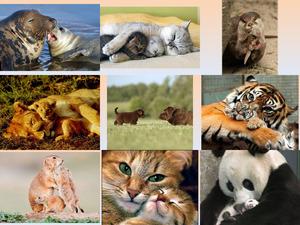 tolle Bilder von Tiermüttern mit Nachwuchs