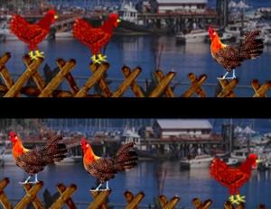 Hühner-Wechsel