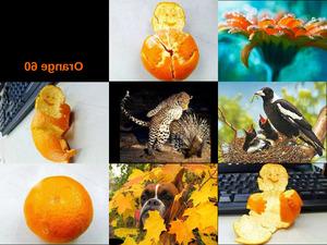 Orange 60