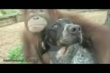wie Tiere miteinander spielen