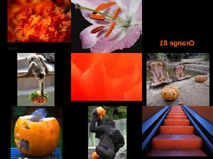 Orange 81