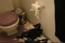 die Katze mit der Toilettenpapierrolle
