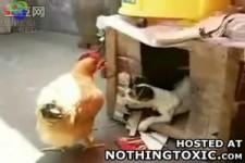 Hund und Huhn