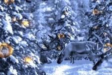 Meine Karte Tiere im Winterwald