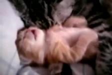 Babykätzchen mit Albträumen