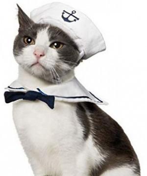 Pfauen-Kostüm für Katzen!