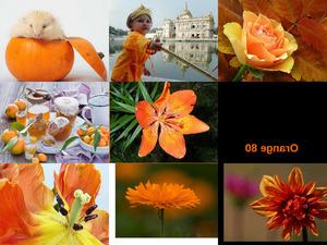 Orange 80