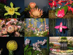 Madeira - Blumenfestival