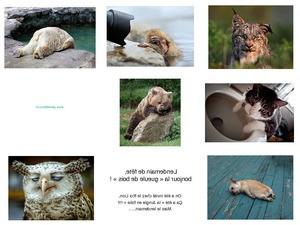lustige Tierfotos