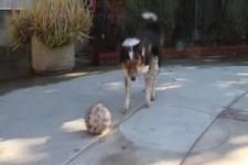 Gute Hundedressur-engl.