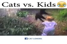 Katzen-Spaß