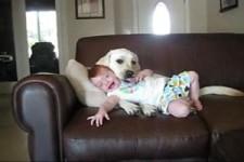 Hunde und Kinder