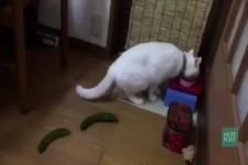 Cats VS Cucumbers1