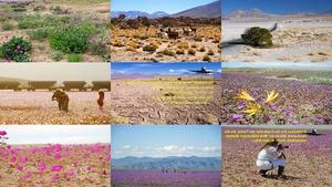 Explosion der Farbe in der Wüste