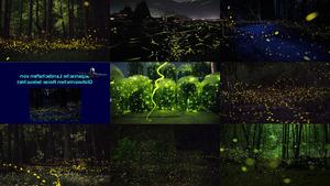 Japanische Glühwürmchen Reise