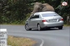Video - Elephant