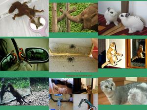 Tiere entdecken ihr Spiegelbild