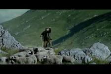 Schafe Zug