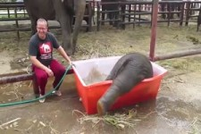 Baby Elephant Bathing Double trouble