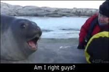 seal am i right