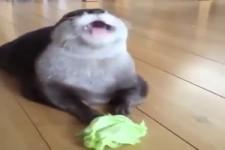 Otter ist Gruenzeug