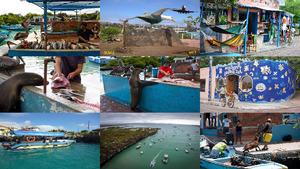 Puerto Ayora Galapagos.E.