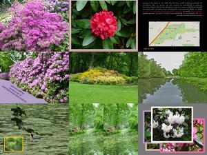 Rhododendronpark in Bremen