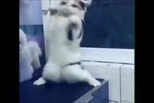Katze tanzt